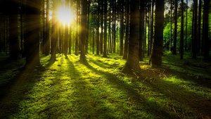 Medio ambiente, naturaleza viva y verde.