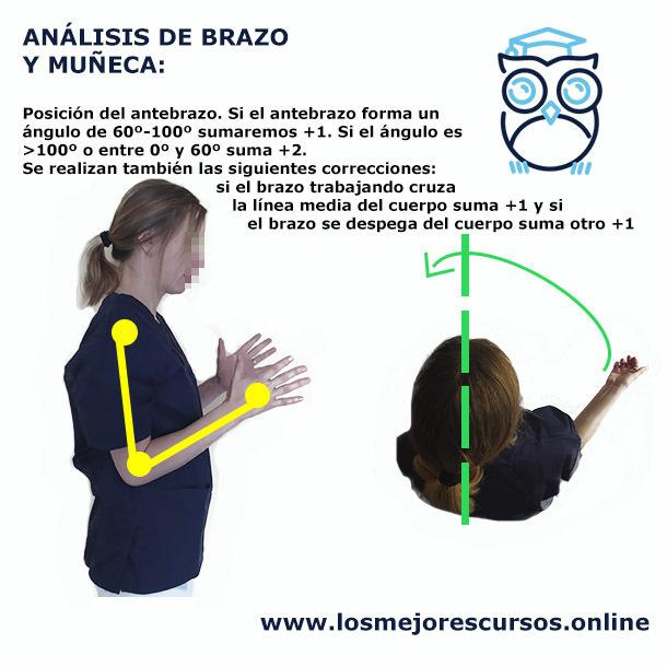 método rula antebrazo y su postura